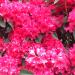Azalea Garden Bandon OR