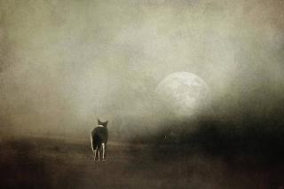 Journey-into-moonlight-jai-johnson